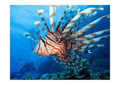 Wierd Sea Creatures