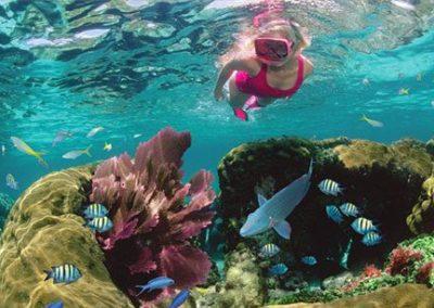 Gorgeous Underwater Scenery!